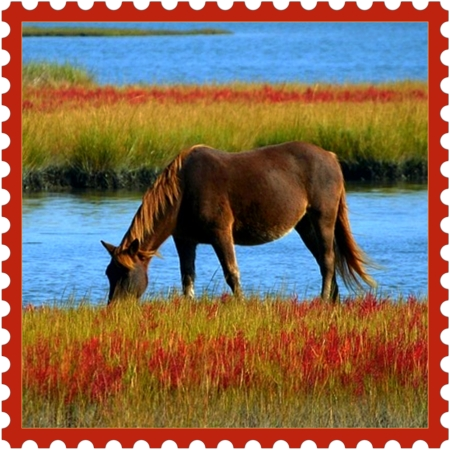 Reality on ideafill.me | blue-color, red-color, knowing, grass, horse, water, nature