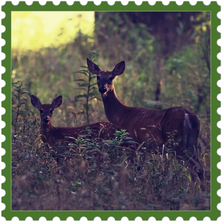 Stay Present | deers, brown-color, nature, present