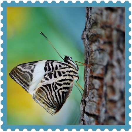 Creativity on http://ideafill.me | blue, yellow, green, brown, butterfly, tree, zebra