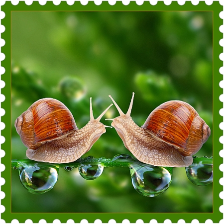 Love is Space | colours, drops, happy, inspiration, music, nature, quotes, space, beige-color, brick-color, green-color, heart, life, love, shine, time, snails